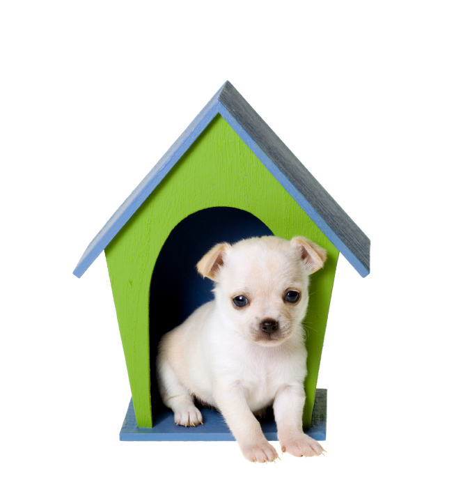 WHY YOU NEVER PUT YOUR SPOUSE IN THE DOGHOUSE Don Brobst