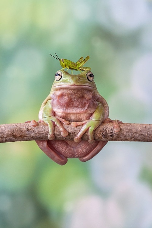 Frog with a bug on his head, humiliation, king David, man unto God's own heart