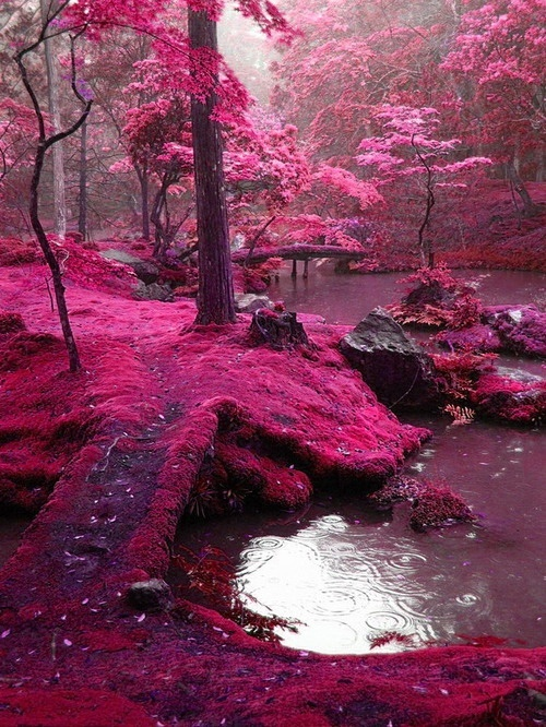 Pink Moss Bridges - Ireland