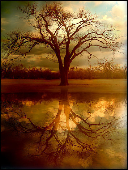 Reflected Tree-flat,550x550,075,f_large