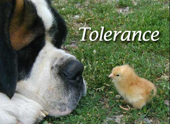 Tolerance Cropped
