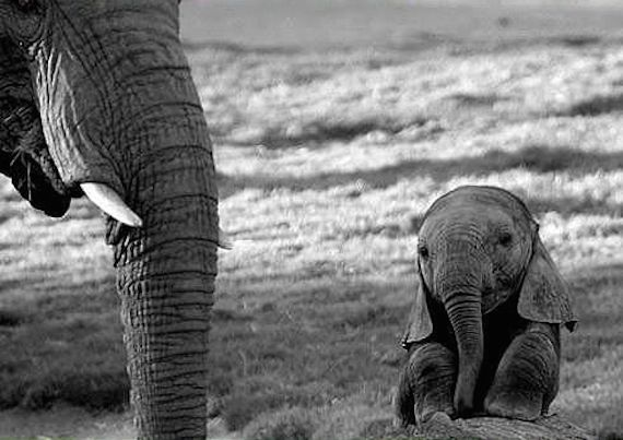 Elephant and baby elephant copy