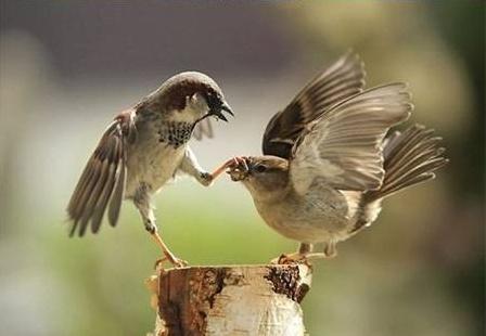 Snake biting frogs mouth Bird Holding Birds mouth shut