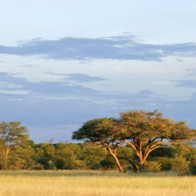 The Beauty of Africa